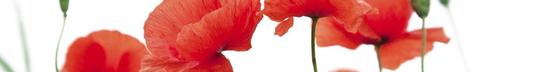 poppy-flower-1606077_1920